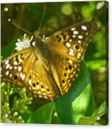 Nature In The Wild - Kaleidoscope Of Color Acrylic Print