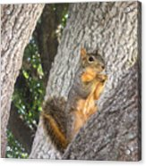 Nature In The Wild - Keeping Watch Acrylic Print