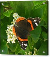 Nature In The Wild - Landing Perfectly Acrylic Print