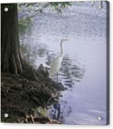 Nature In The Wild - Musings By A Lake Acrylic Print