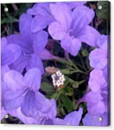 Nature In The Wild - Ring Around The Posy Acrylic Print