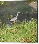 Nature In The Wild - Target Identified Acrylic Print