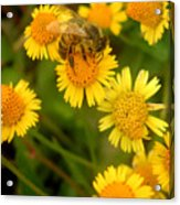 Nature In The Wild - The Nectar Company Acrylic Print