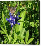 Nature In The Wild - Those Sweet Blues Acrylic Print