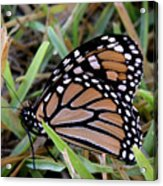 Nature In The Wild - Traveling Light Acrylic Print
