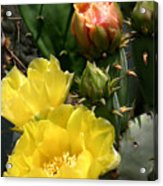 Nature In The Wild - Two Blooms And Counting Acrylic Print