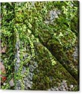 Nature - Living Retention Wall 1 Acrylic Print