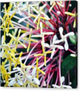 Nature Museum Botanical Acrylic Print