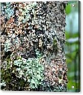Nature Painted Tree Bark Acrylic Print
