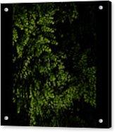 Nature Plants Acrylic Print