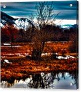 Nature Reflects Acrylic Print