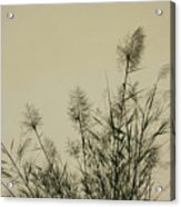 Nature Scenery In Lijiang China Acrylic Print