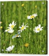 Nature Spring Scene White Wild Flowers Acrylic Print