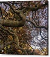 Nature Tangle Acrylic Print