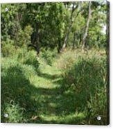 Nature Trail Acrylic Print