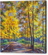 Nature Trail Turn Of Autumn Acrylic Print by Fiona Craig