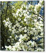 Nature Tree Landscape Art Prints White Dogwood Flowers Acrylic Print