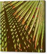 Nature Up Close 6 Acrylic Print