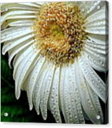 Nature When Wet Acrylic Print