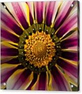 Natures Artwork Acrylic Print
