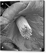 Nature's Beauty In Black And White Acrylic Print