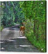 Natures Best Acrylic Print
