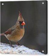 Natures Birds 54 Acrylic Print