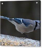 Natures Birds 65 Acrylic Print
