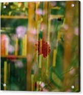 Nature's Books Acrylic Print
