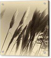 Natures Brushes Acrylic Print