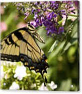 Nature's Canvas Acrylic Print