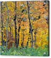 Nature's Colors Acrylic Print