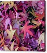 Nature's Confetti Acrylic Print
