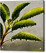 Early Morning Raindrops Acrylic Print