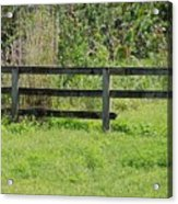 Natures Fence Acrylic Print