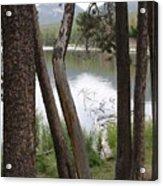Nature's Frame Acrylic Print