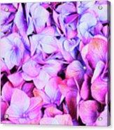 Natures Interpretation Of Butterflies Acrylic Print