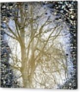 Natures Looking Glass 4 Acrylic Print