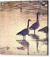 Nature's Music Acrylic Print