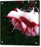 Nature's Ornament Acrylic Print