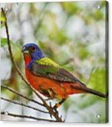 Nature's Palette Acrylic Print