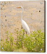 Nature's Picture Acrylic Print