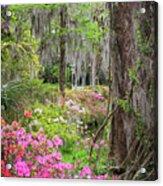 Natures Scenery  Acrylic Print