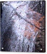 Nature's Shower Head Acrylic Print