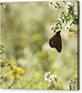 Natures Simplicity Acrylic Print