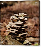 Nature's Stack Acrylic Print