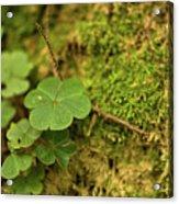 Natures Tiny Work Acrylic Print
