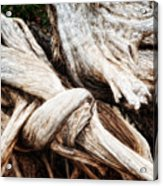 Nature's Twist - Bryce Canyon Acrylic Print