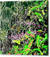Nature's Way Acrylic Print by Eikoni Images