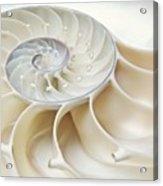 Nautilus 2by3 Acrylic Print
